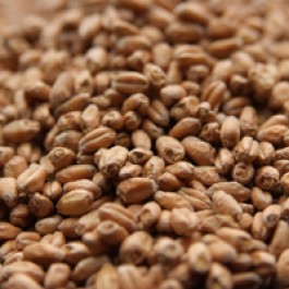 Floor Malted Bohemian Wheat, German1 oz
