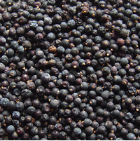 Juniper Berries, 2 oz